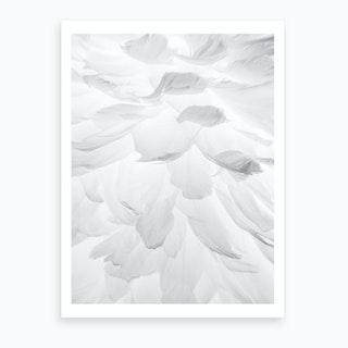 Feathers II Art Print