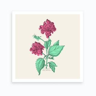 Rose Hibiscus Art Print