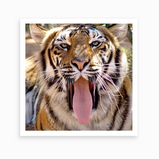 Tiger Face II Art Print