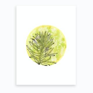 Euphorbia On Green And Yellow Art Print