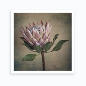 Protea Still 2 Art Print