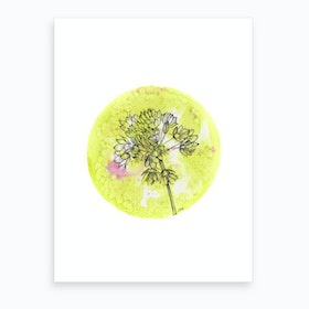 Allium On Green With Pink Art Print