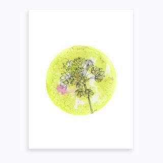 Allium On Green With Pink Art Print