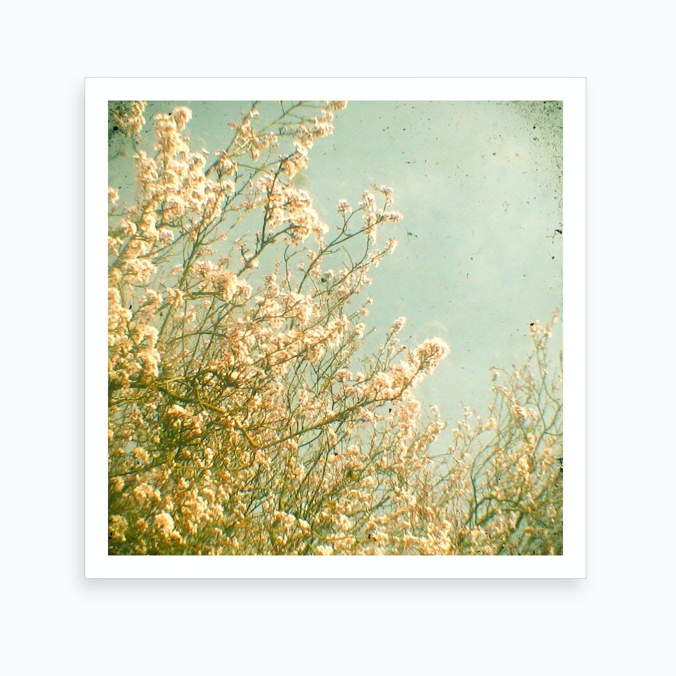 Flowers And Sun Art Print