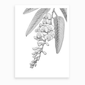 Hardenbergia Art Print