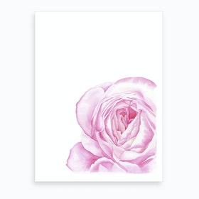Magenta Rose Art Print
