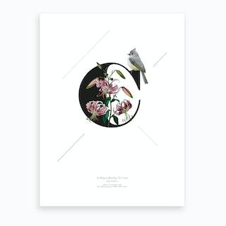Botanical Alphabet C Art Print