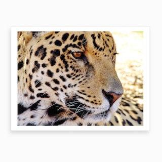 Jaguar Close Up Art Print
