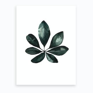 Botanical Illustration Arboricola Schefflera Art Print