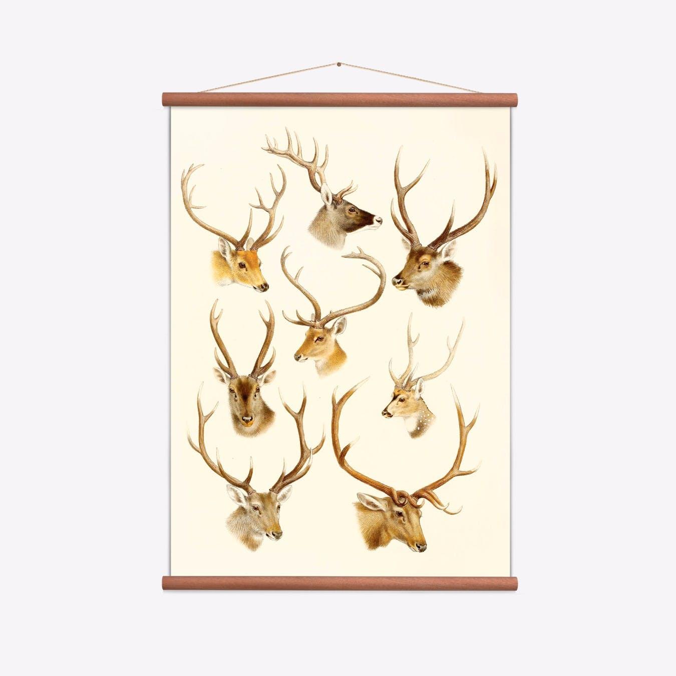 Deer I Print