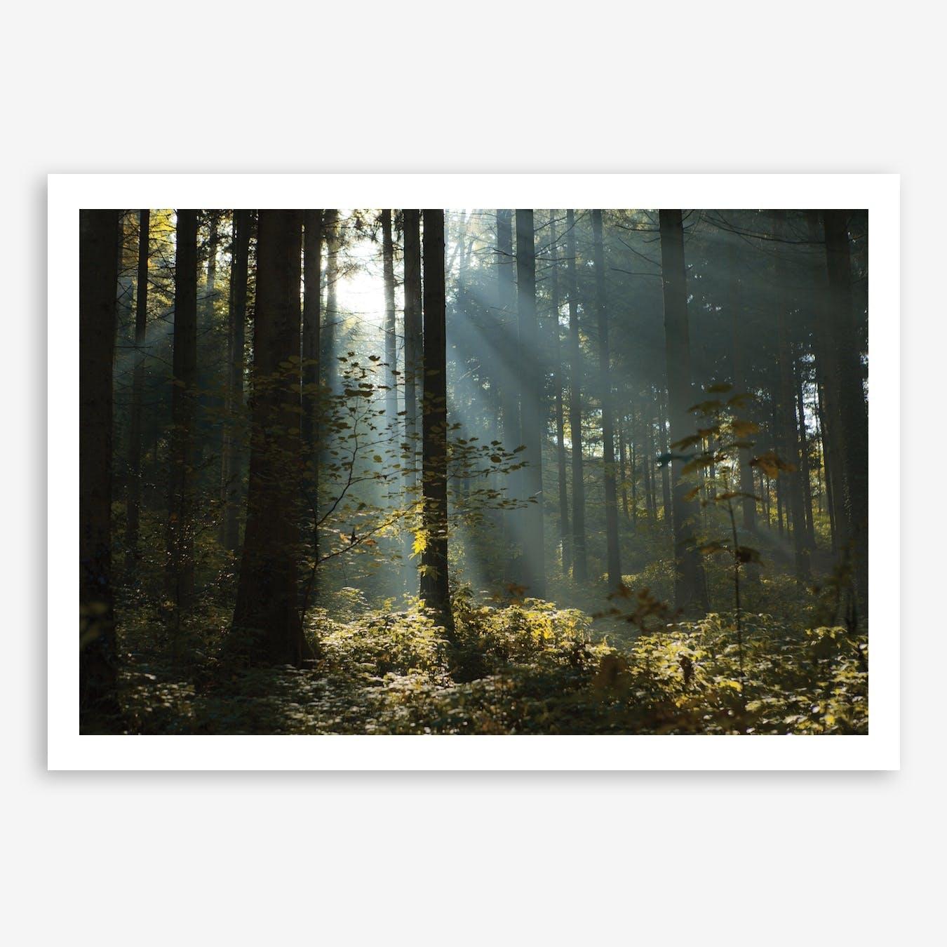 Reidholz Art Print