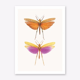 Insects I Art Print