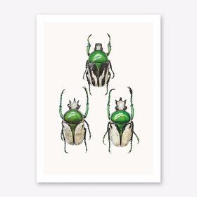 Insects IV Art Print