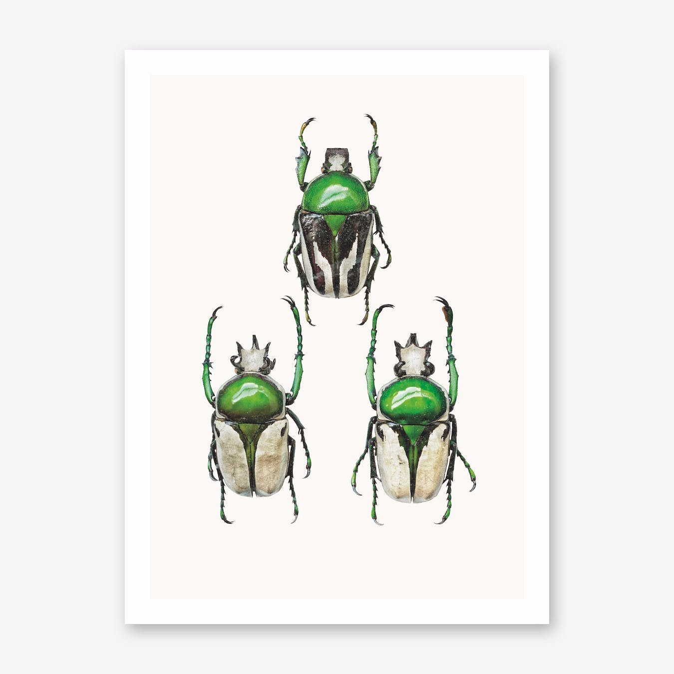 Insects IV Print