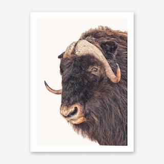 Animal II Art Print