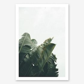 Bananatree Art Print