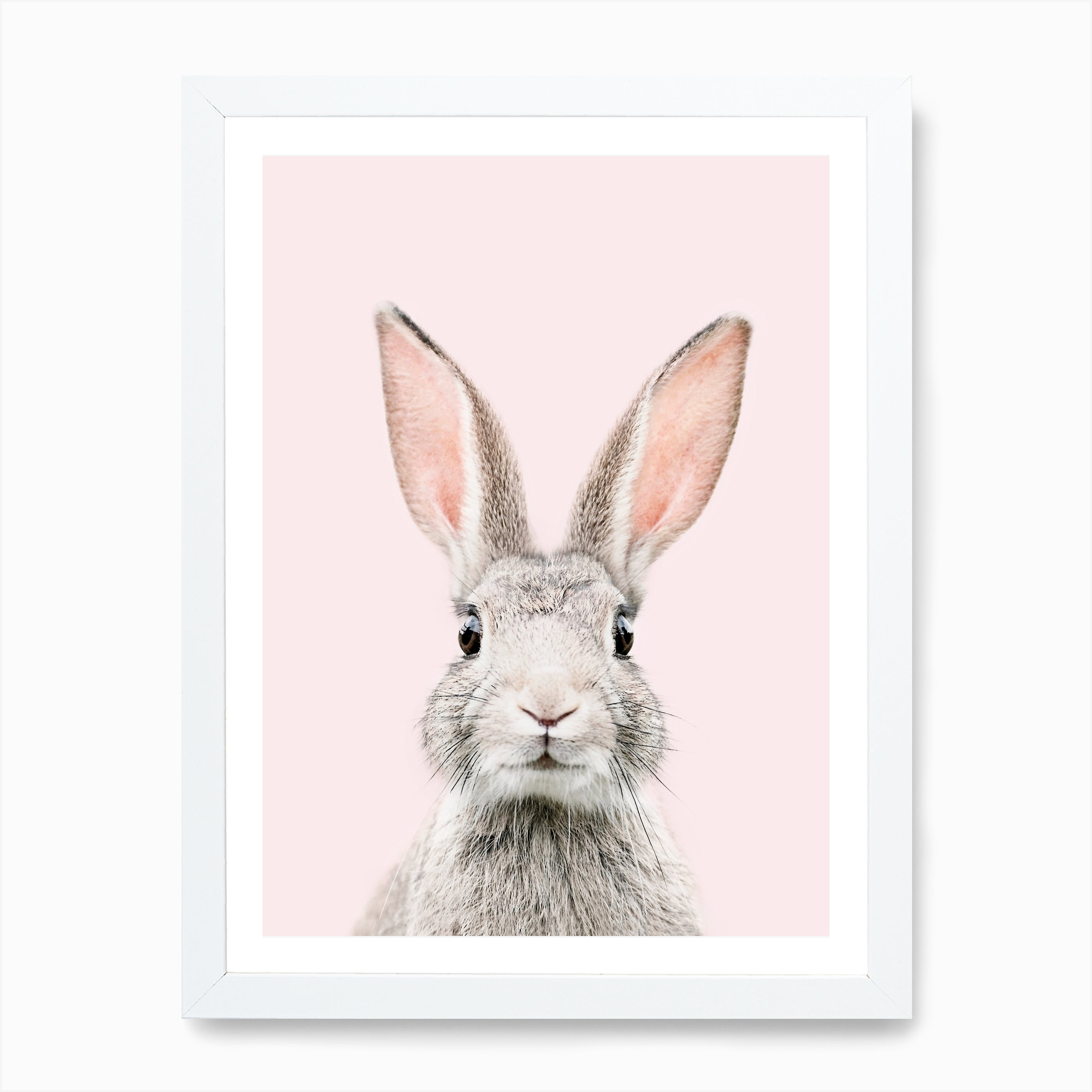 Bunny Face Canvas Print by Sisi and Seb