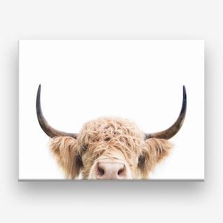 Peeking Cow  Color Canvas Print