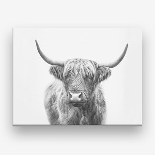 Highland Bull Canvas Print