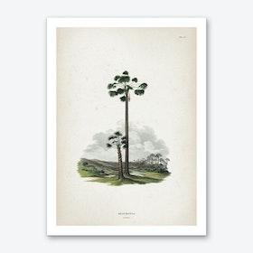 Vintage Martius 1 Mauritia Vinifera Art Print