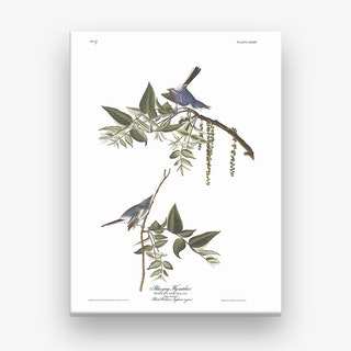Bluegrey Flycatcher Canvas Print