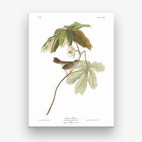 Swamp Sparrow Canvas Print