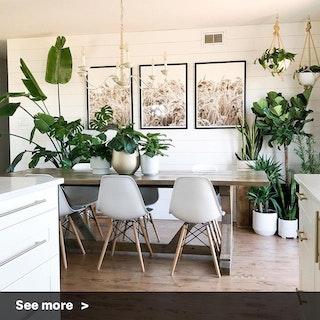 Rustic Indoor Garden